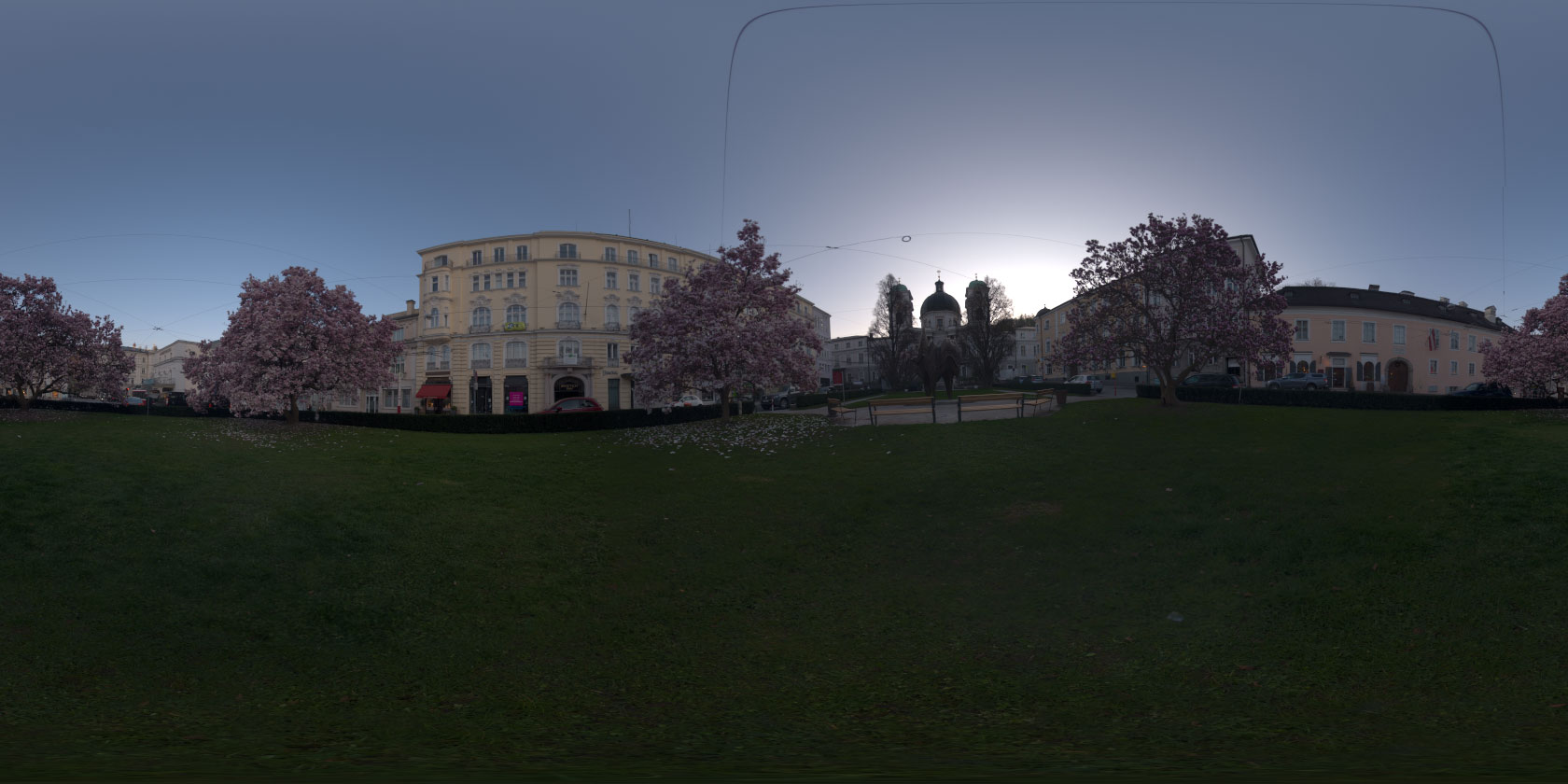 hdri 360176 magnolia trees blooming in the city openfootage