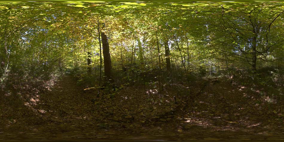 hdri 360 forrest in autumn openfootage