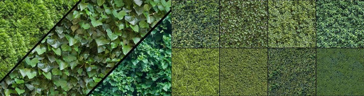 OpenfootageNet_Hedge_texture