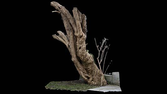 Asset 3dscan syringa tree